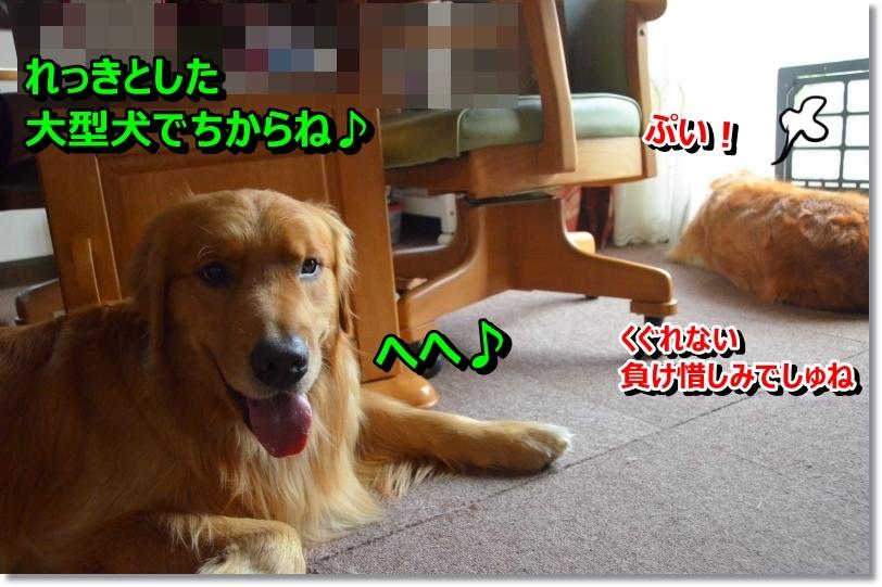 DSC_7184_201406232145352ed.jpg