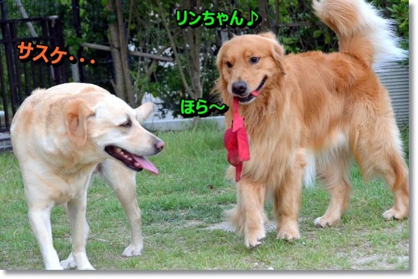 DSC_7290_201407141036327df.jpg