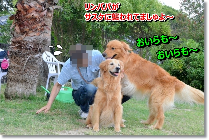 DSC_7307.jpg