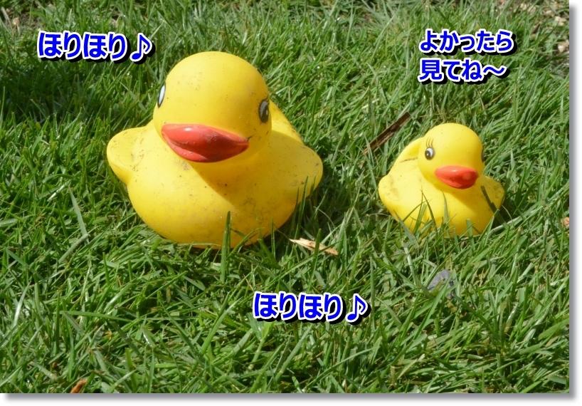 DSC_7427_201407222000081e0.jpg