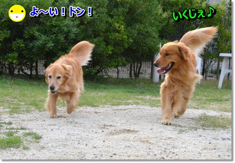 DSC_7700_20140627092503862.jpg