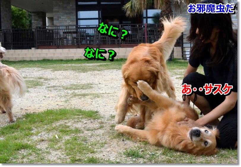 DSC_7768_20140627093037c25.jpg