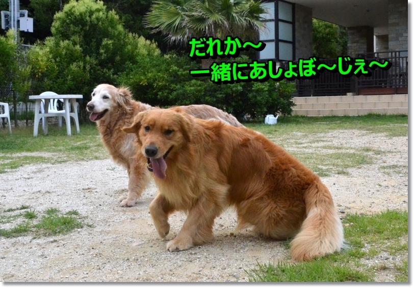 DSC_7775_20140627093040c11.jpg