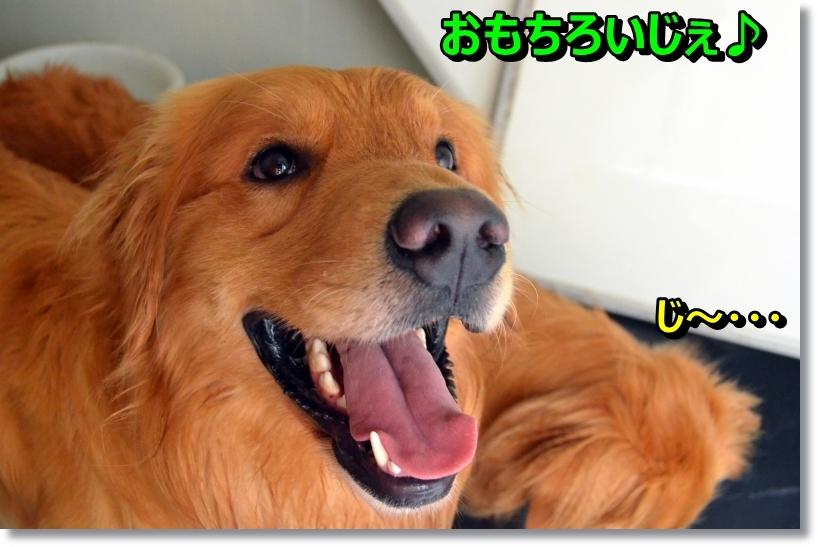 DSC_8098.jpg