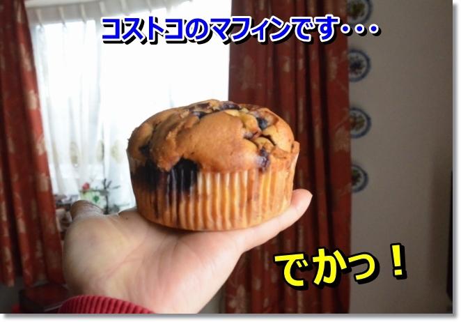 DSC_8321_20140228235336400.jpg