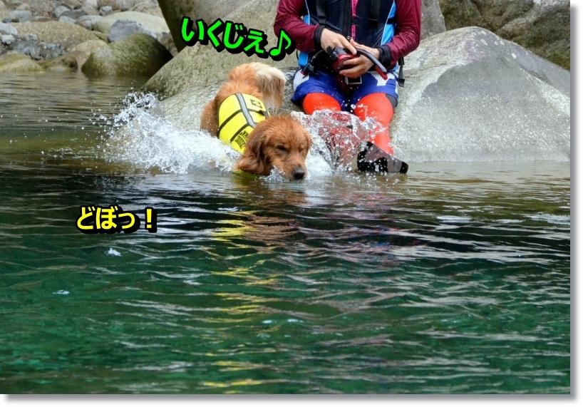 DSC_8544_201407181230156e3.jpg