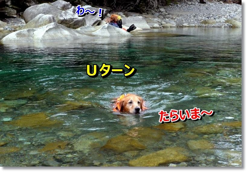 DSC_8587_201407181231006c3.jpg
