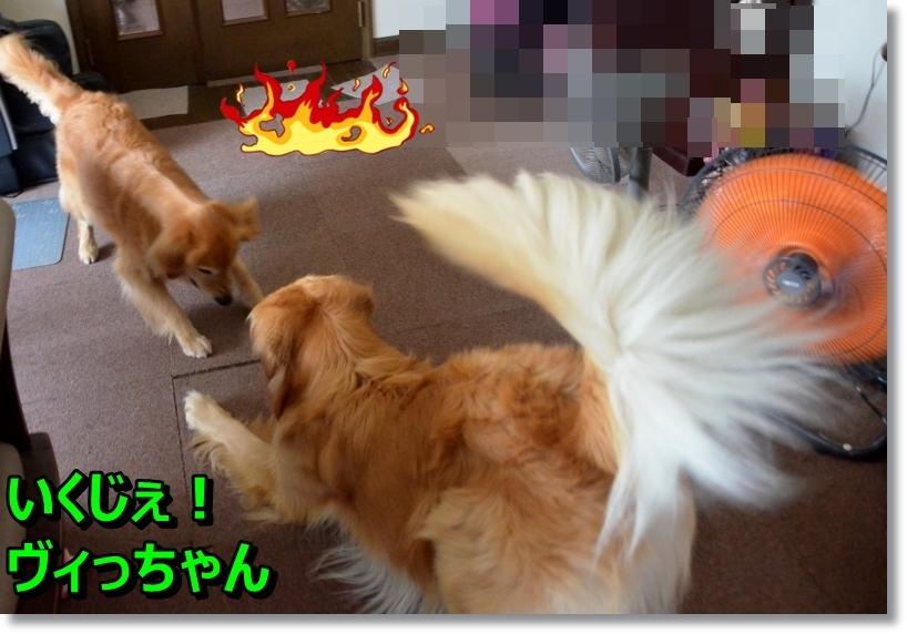 DSC_8649_201407311031535c6.jpg