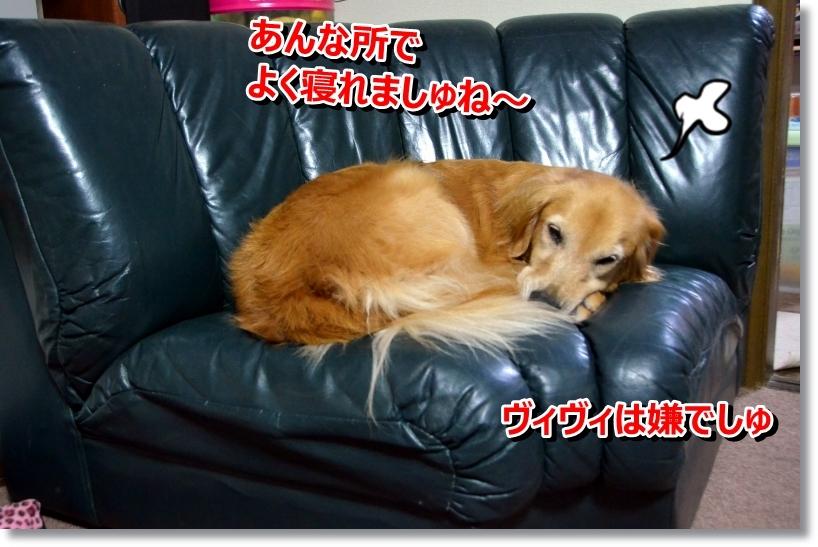 DSC_8685.jpg