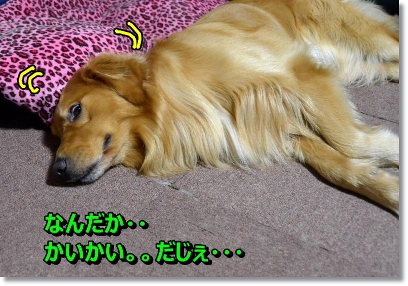 DSC_8715_201407290001473f4.jpg