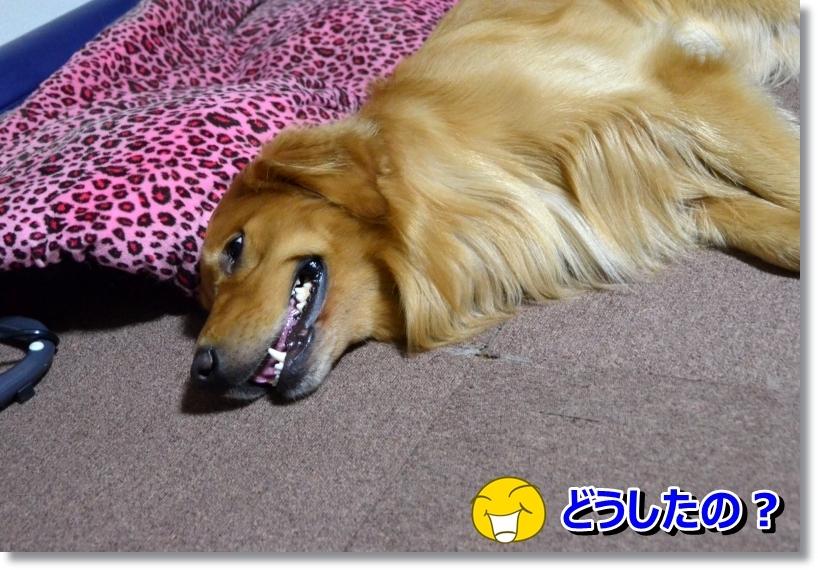 DSC_8716_2014072900014885b.jpg