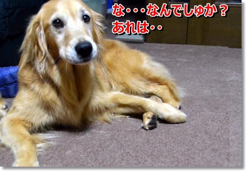 DSC_8732.jpg