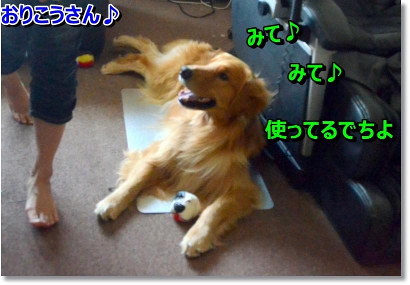 DSC_8762_20140802231658ee4.jpg