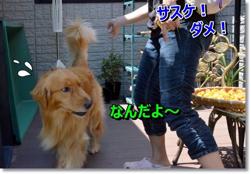 DSC_8775_20140731223046e3c.jpg