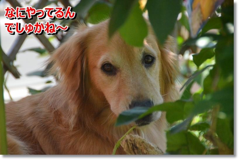 DSC_8791_201407312231290bd.jpg