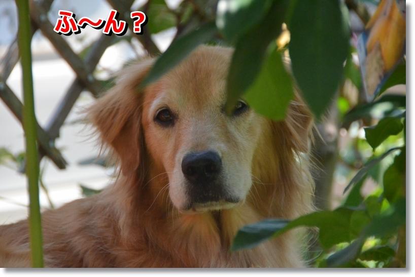 DSC_8792_2014073122313032d.jpg