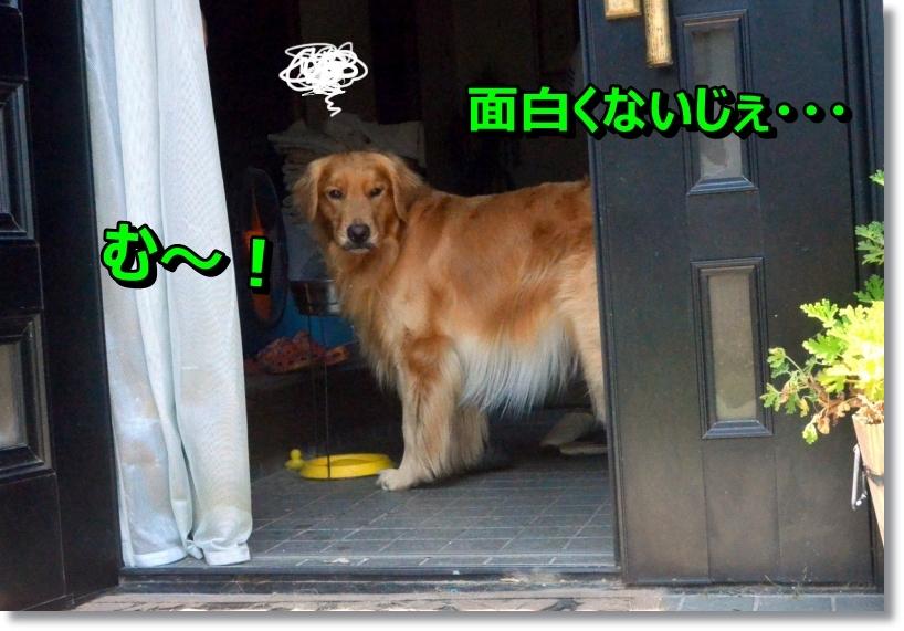 DSC_8796.jpg