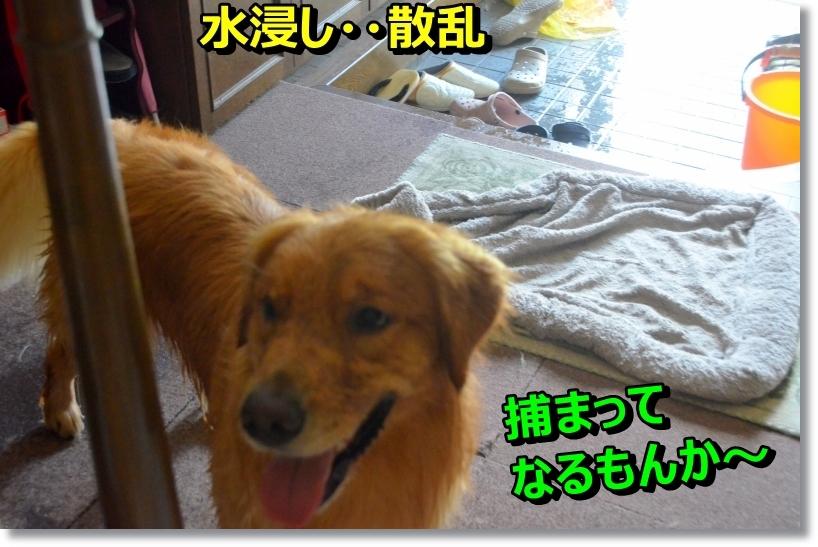 DSC_9086_201408140030519d3.jpg