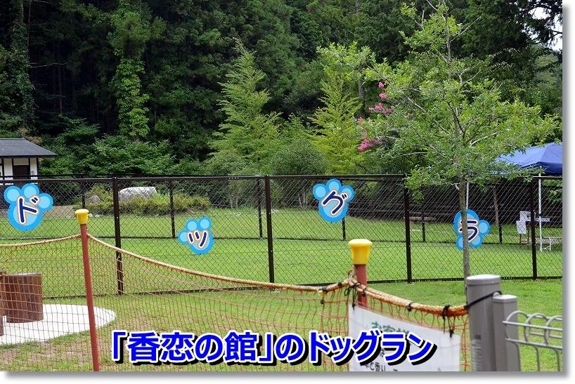 DSC_9612_20140825101951855.jpg