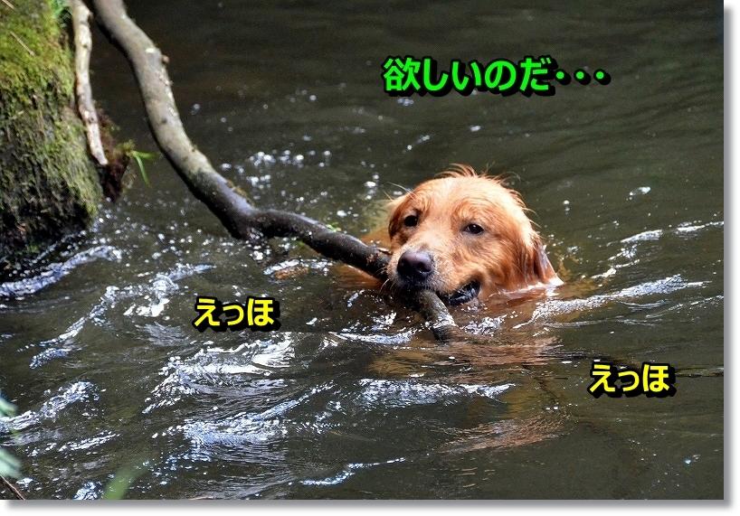 DSC_9676_20140826003258cfb.jpg