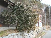 2014-03-01-006.jpg