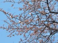 2014-04-15-005.jpg
