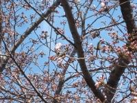 2014-04-15-006.jpg