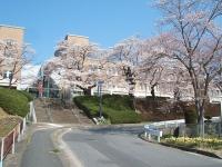 2014-04-20-001.jpg