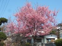 2014-04-20-036.jpg
