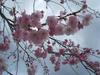 2014-04-22-061.jpg