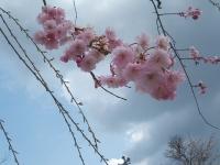 2014-04-22-062.jpg