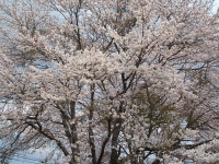 2014-04-22-k067.jpg