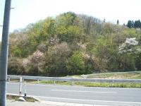 2014-05-04-013.jpg