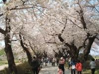 展勝地2014-04-26-北上市035