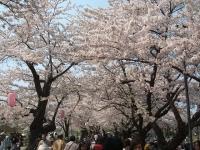 展勝地2014-04-26-北上市002