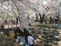 展勝地2014-04-26-北上市023