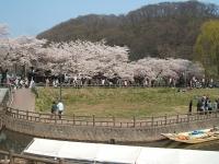 展勝地2014-04-26-北上市028