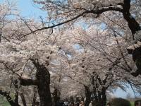 展勝地2014-04-26-北上市050