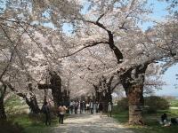 展勝地2014-04-26-北上市049