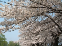 展勝地2014-04-26-北上市042