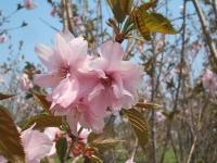 展勝地2014-04-26-北上市056