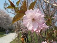 展勝地2014-04-26-北上市055