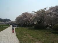 展勝地2014-04-26-北上市054
