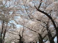 展勝地2014-04-26-北上市051