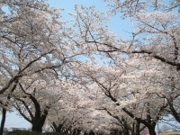 展勝地2014-04-26-北上市061