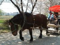 展勝地2014-04-26-北上市058