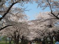 展勝地2014-04-26-北上市057