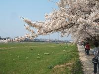 展勝地2014-04-26-北上市067