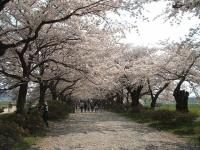 展勝地2014-04-26-北上市072