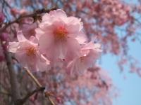 展勝地2014-04-26-北上市071